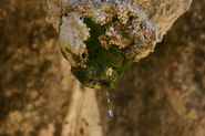 Mosses around Stalactite with Waterdrop