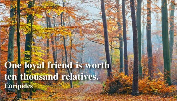 File:One loyal friend is worth ten thousand relatives.jpg