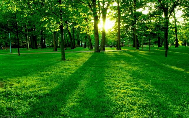 File:Green nature.jpg