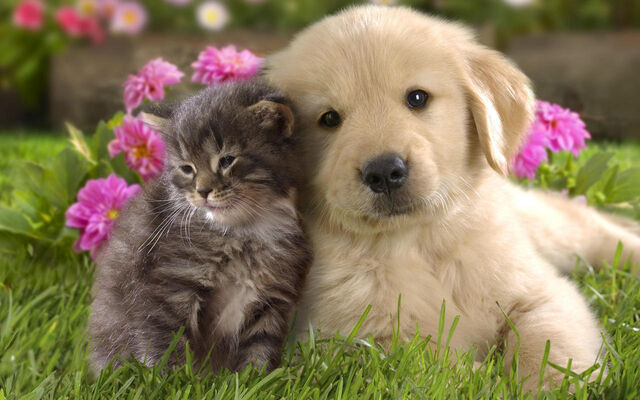 File:Puppy and kitten.jpg