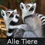 File:DE-Tiere-main.jpg
