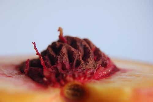File:Nectarine macro.jpg