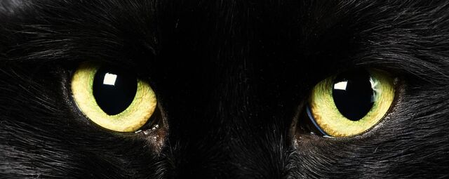 File:Cat-pictures-black-cat-577.jpg