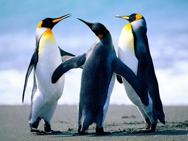 File:Penguins225744.jpg