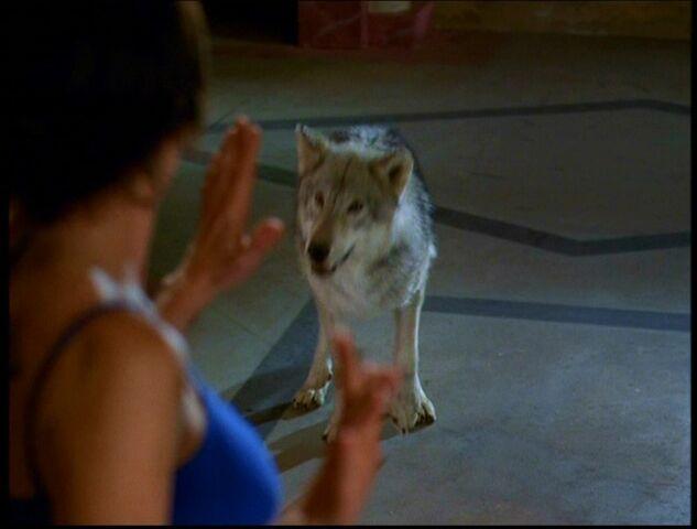File:6x14-Wolf.jpg