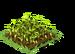 Spelt Seedling