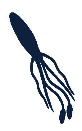 File:Squid Article.png