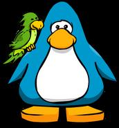Green Parrot556677