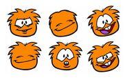 Orange Puffle Pics