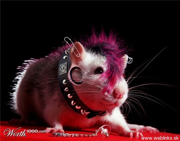 File:Hike Hamster.jpg
