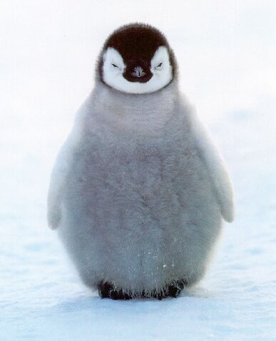 File:Penguin.jpg
