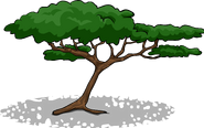 AcaciaTree1.PNG