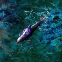 RA3 Dolphin