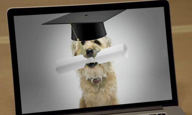 File:6x3 Ruffles the canine Greendale student.jpg