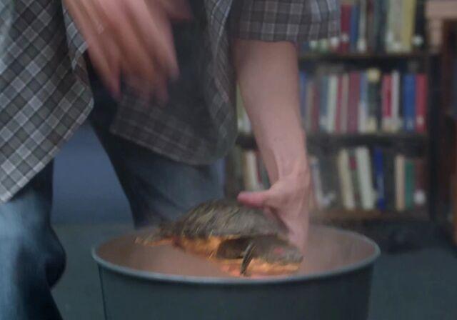 File:Turtle on fire.jpg