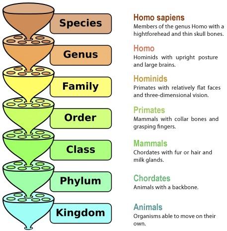 File:Taxonomy chart.jpg