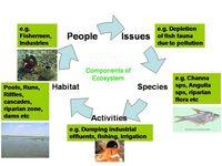 Ecosystem componants