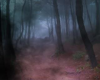 Woods night