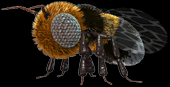 File:C3bee.png