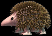 C3hedgehog