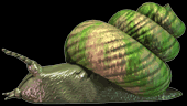 File:C3snail.png