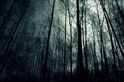 Dark-forest-night-image-31001