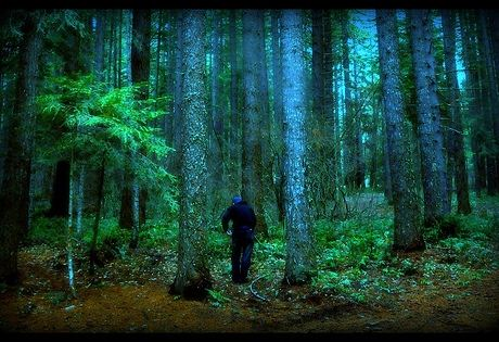 File:Scary-Forest-Seattle.jpg