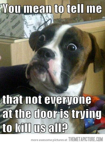File:Funny-dog-scared-surprised-meme.jpg