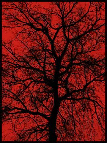 File:Poison tree.jpg