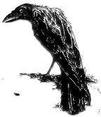 File:A Raven.jpg