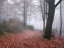 Teutoburg-forest