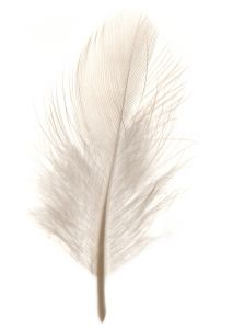 File:White feather.png