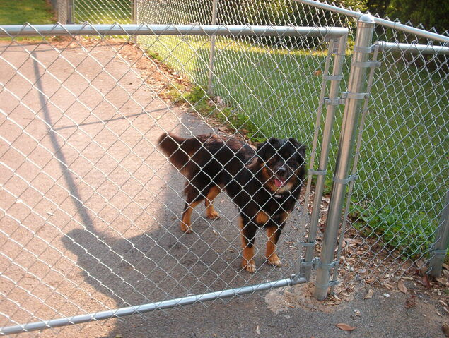 File:Callie in jail.JPG