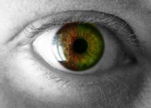 Green Eyes0