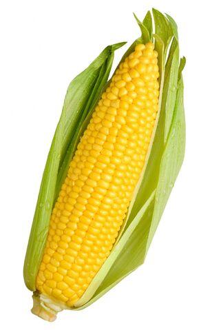 File:Corn.jpg