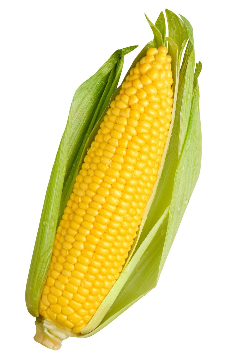 Single Corn Stock Photo - Image: 51131504