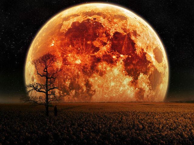 File:Planet trees sky red night moon fields tree field space desktop hd wallpaper-normal.jpg