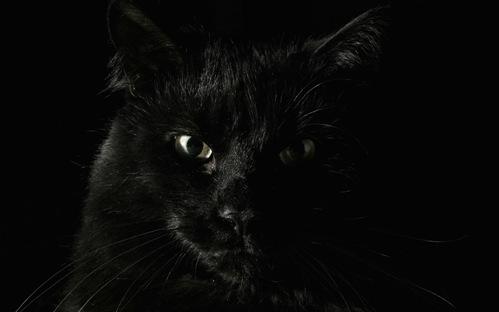 File:Black-Cat-Staring-at-you-Wallpaper-5.jpg