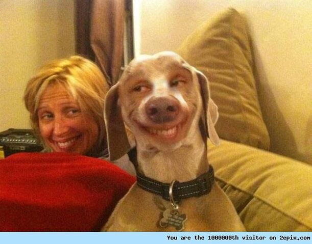 File:Smiling Dog.jpg