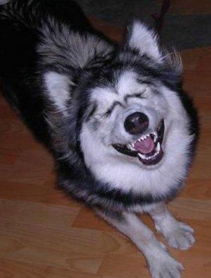 File:Smile-dog.jpg