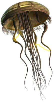 File:Hydroid Medusa.png