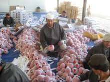 Afghan pomegranate processing