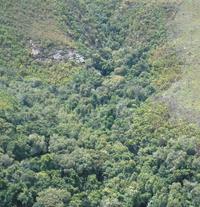 Kungaforestreal