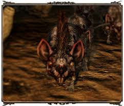 File:Main rat you need to kill.jpg