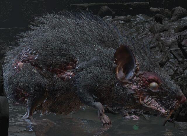 File:Giant rat.jpg