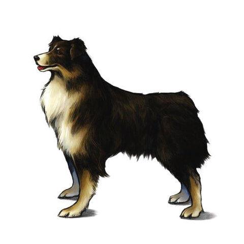 File:Angelo(Rinoa's Dog.jpg