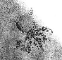 Nameless Worm