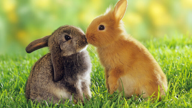 File:Cute bunnies.jpg