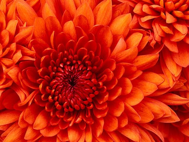 File:Flower-D.jpg