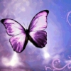 File:Purple-floral-butterfly.jpg